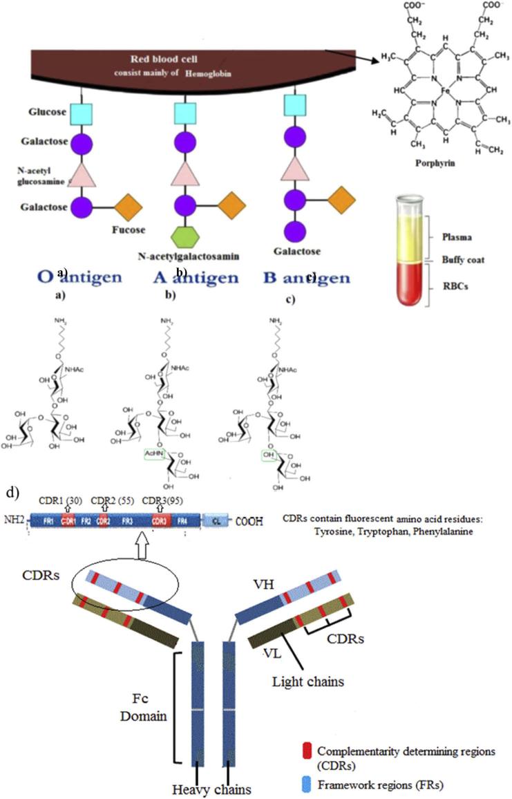 Spectroscopic properties of various blood antigens/antibodies.